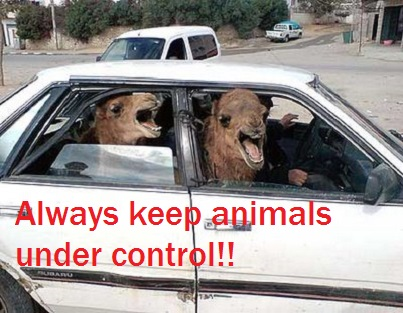 driving lessons nottingham animals